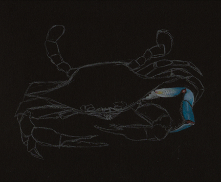 crab-drawing-phase-2
