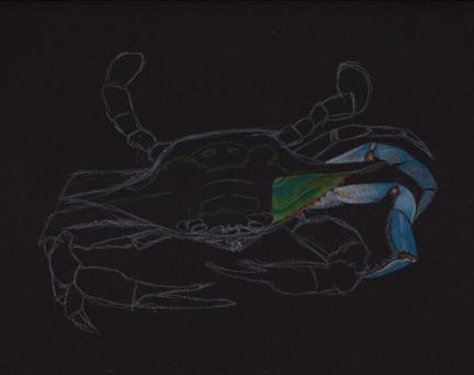 crab-drawing-phase-3