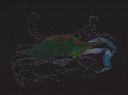 crab-drawing-phase-4
