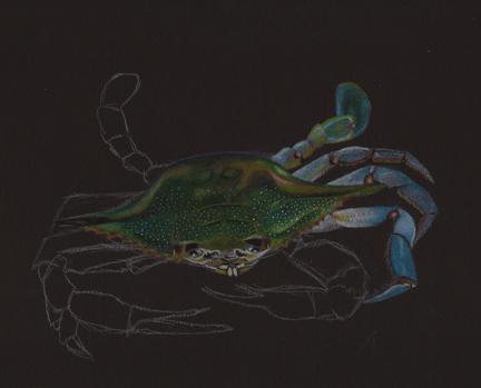 crab-drawing-phase-5