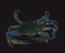 crab-drawing-phase-Final