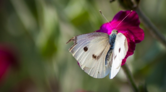 moth-001