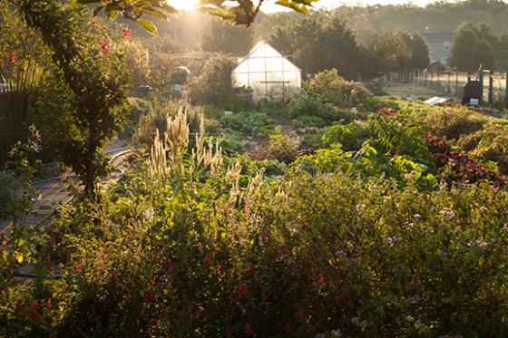 IMG_7731-abundant-garden